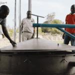 A ciprusfa biomassza és ciprusfa illóolaj: sikertörténet Kenyából